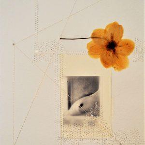 5 DORIDE 2020 - 30 x 21 cm - foto su carta cotone- fiore essicato - cuciture - filo argento