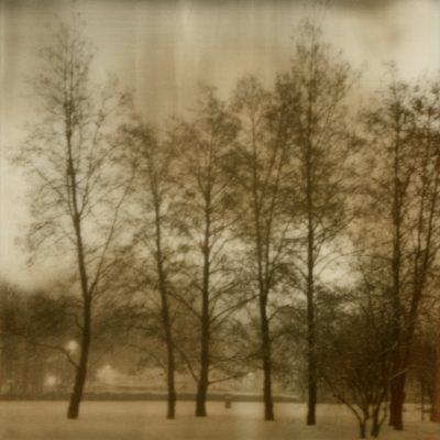 alberi fb