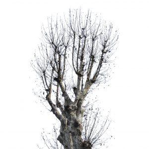 albero antonello